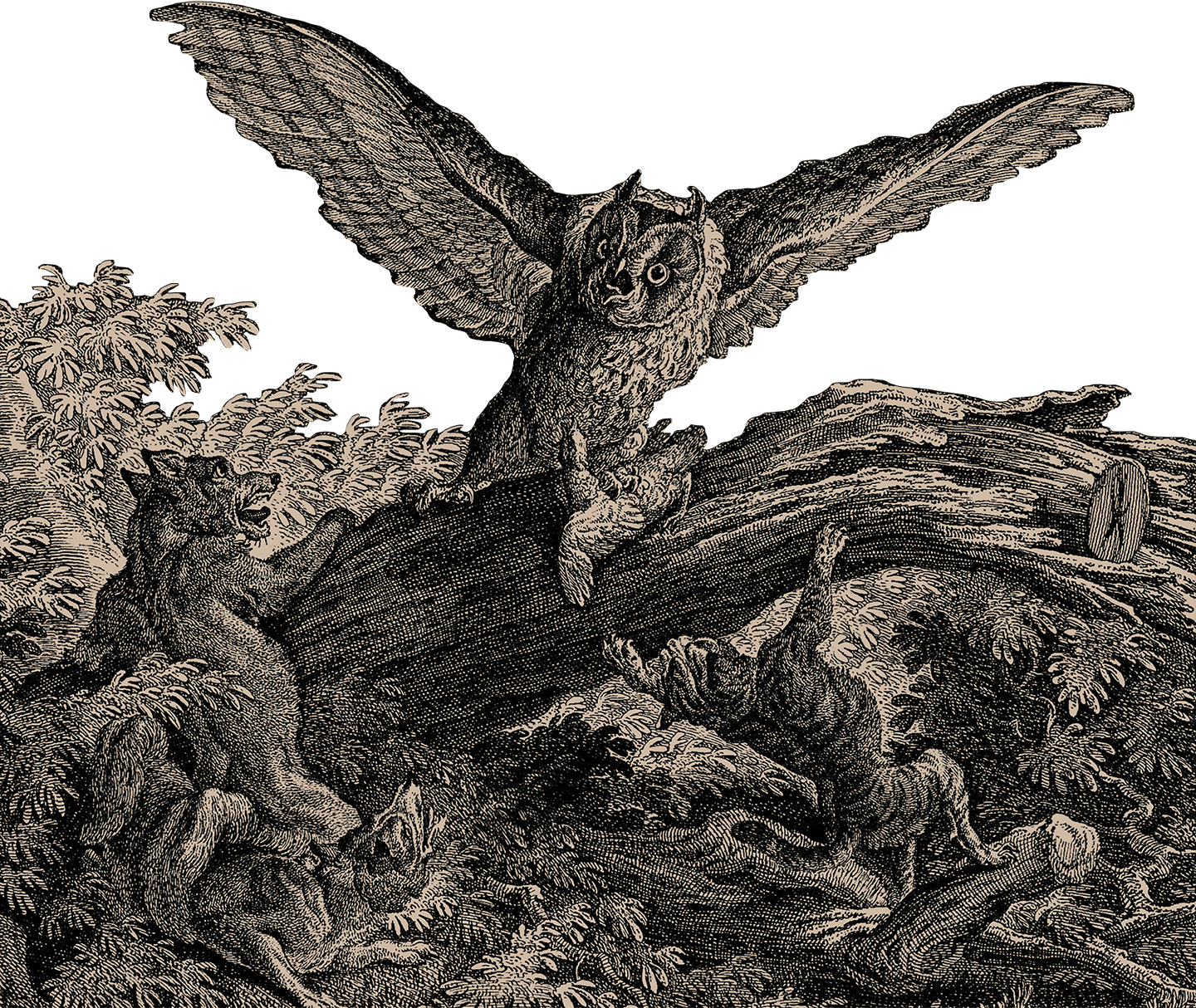Owl and Lynx etching foreground